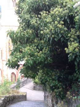 Heimat ist, wo Efeu über alte Mauern kriecht